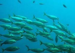 İqlim dəyişikliyi balıqçılığa ciddi zərər vuracaq