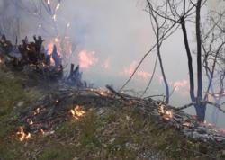 Azərbaycanda da meşə yanğını başladı