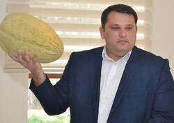 Azərbaycanda yemişin yeni sortları yaradılıb - FOTO