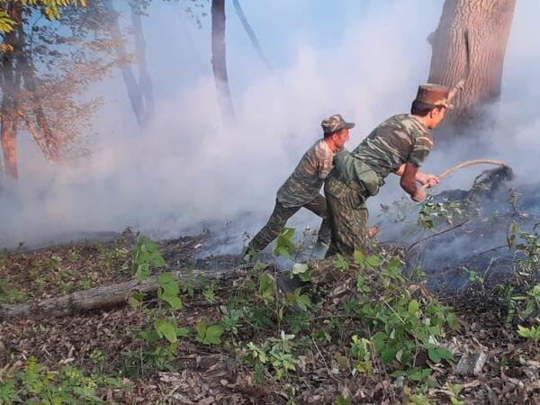 Yardımlıdakı meşə yanğını davam edir - Əməliyyat FOTOları