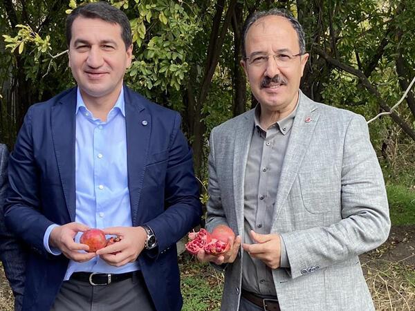 Hikmət Hacıyev səfirlə nar yığdı - FOTO