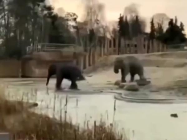 Fillərin maraqlı VİDEOsu rekord qırır