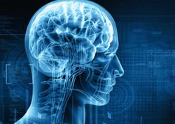 """Üç min il əvvəl insan beyni niyə kiçildi? - <span class=""""color_red""""> ARAŞDIRMA</span>"""