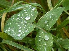 Yağış yağacaq - PROQNOZ